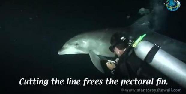 freed dolphin