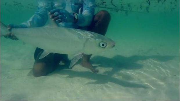 milkfish catch and release